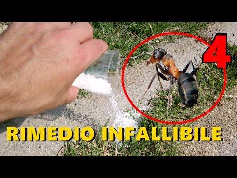 4 rimedi contro le formiche - youtube