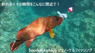 釣れる瞬間が見れる新感覚の海釣りです! 糸を垂らした瞬間に魚が飛びつ...