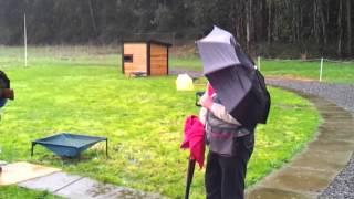 skeet bajo la lluvia
