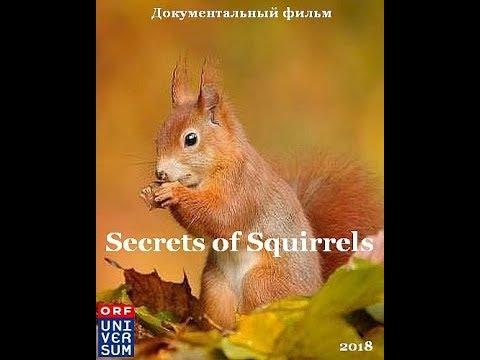 Документальный фильм Беличьи секреты/Secrets Of Squirrels