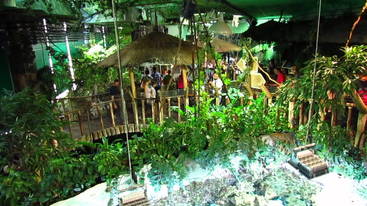 Tropicarium Budapest - De?tn? prales / Rainforest - rain - YouTube