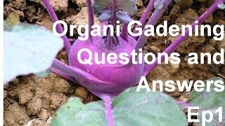 Can I use newspaper in my garden? And more Gardening Q & A's Ep1