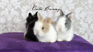 Dica Cute Bunny -  A Chegada do Mini Coelho