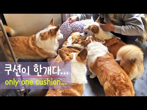 if-there-are-8-dogs-and-one-cushion,-how-do-we-decide-the-order?