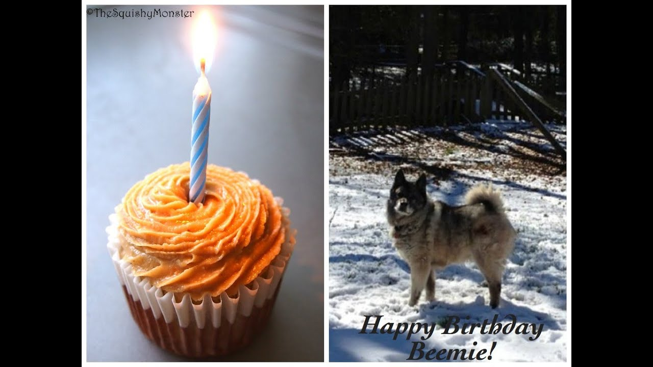 How to make a Cake For Your Birthday Dog 4 All Natural Ingredients