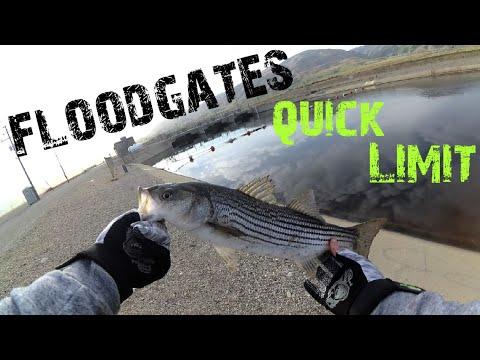 Fishing Striper|FLOODGATES @ The California Aqueduct
