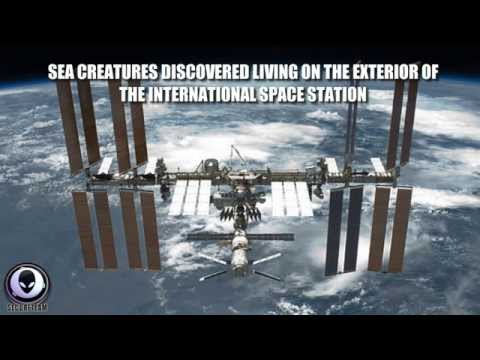 8/21/2014 SEA CREATURES FOUND IN SPACE ON ISS EXTERIOR! ALIEN LIFE COVERUP