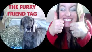 Furry Friend Tag: Scout The Weimaraner