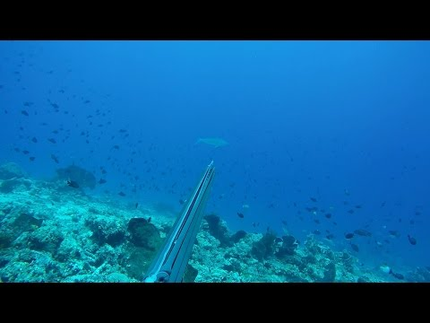 Spearfishing GREEN JOB FISH and GT on Arakan Spot, North Sulawesi - Indonesia