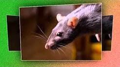 Exterminator | Cummings Termite & Pest Control - Scottsdale, AZ