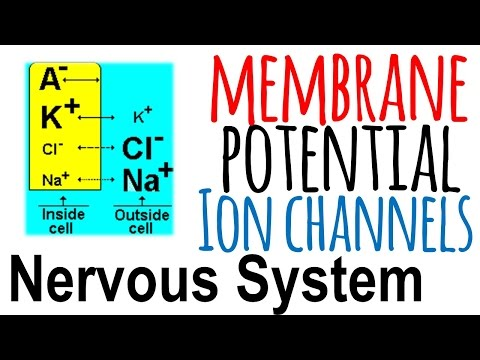 Ion channels and membrane potential