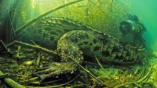 Diving with MASSIVE 1500+lb Crocodiles in Africa