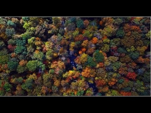 Colorful TREES Relaxing Music | ARBOLES de Colores Musica Relajante