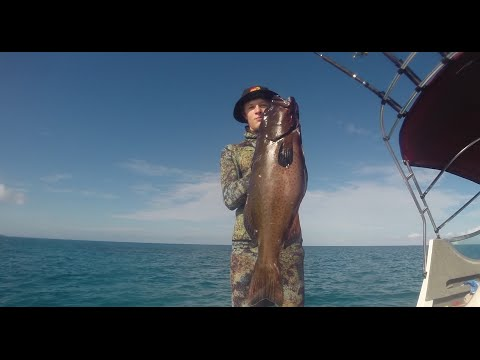 Spearfishing Coral Trout