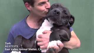 Turk - Available now for adoption at East Valley Animal Shelter in Van Nuys, CA