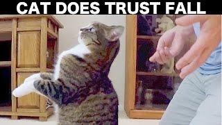 この猫、飼い主への信頼がすごい…背中から後ろに倒れる(動画)