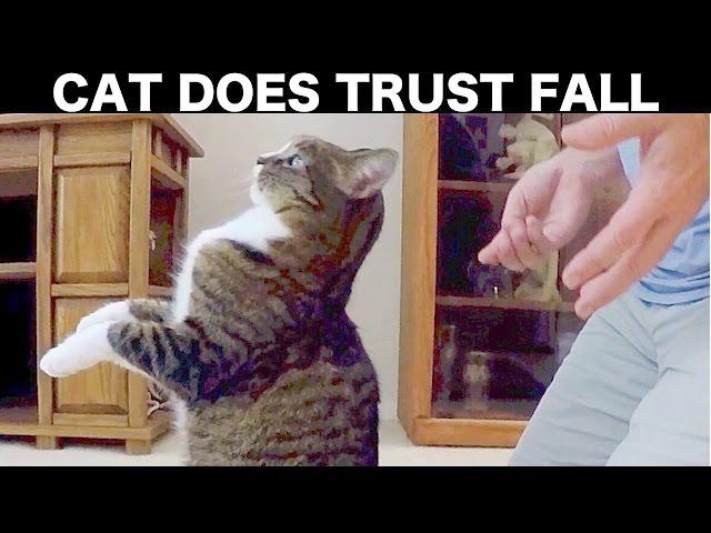 CAT DOES TRUST FALL