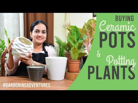 Buying Ceramic Pots & Potting Plants | Gardening Adventures | Gardening Basics