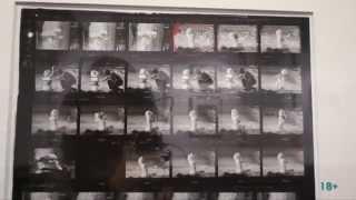 Выставка ''Личный фотограф''. Лоуренс Шиллер | Lawrence Schiller. ''Personal Photographer''