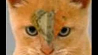Squirrelflight- I Won