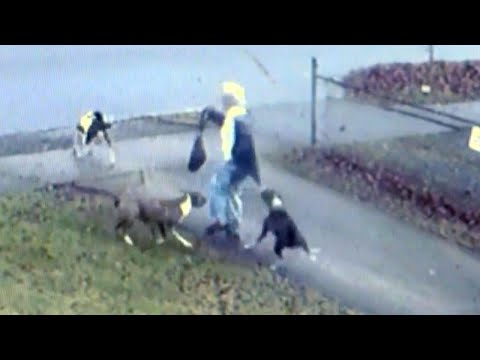 Why a Pack of Dogs May Have Attacked a Woman