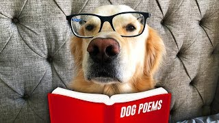 Father's Day Poems for a Dog Dad (Trev's Surprise Present)