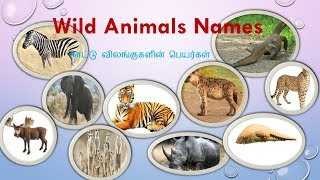 animal names in Tamil|wild animal names and pictures in Tamil and English|வனவிலங்குகள்