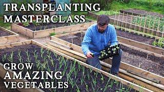 The No-Nonsense Guide t๐ Transplanting Seedlings