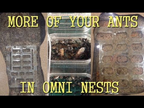 More of Your Ants | Natural History Museum of LA | GAN Farmer Feature #3