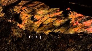 Schattenwelt - Totholz - TRAILER