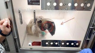 Кот Пират получил прозвище Терминатор Спасение животных в Новосибирске cat rescue