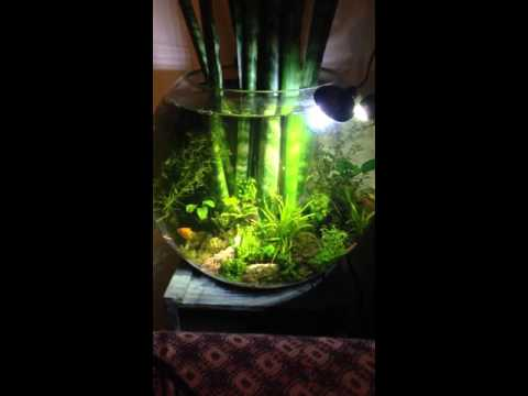 Cool aquarium garden in a bowl YouTube