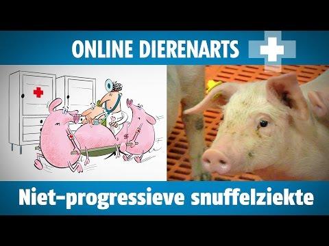 Online dierenarts: niet-progressieve