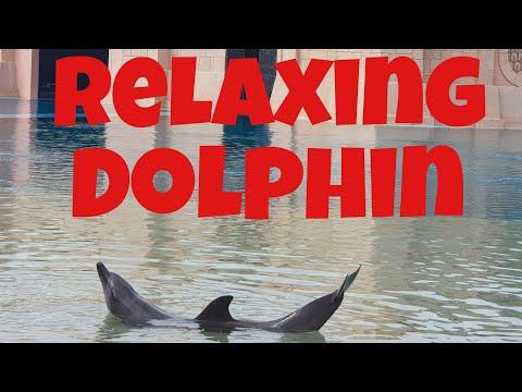 Dolphin Bay @Atlantis Hotel Dubai -Dolphin show – Swim with the Dolphin