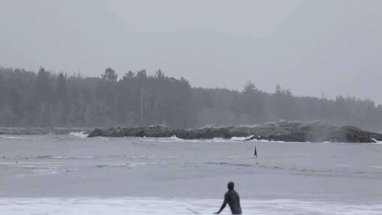 Orcas with Surfers