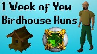 [OSRS] 1 Week of Yew Birdhouse Runs