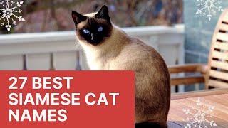27 Best Siamese Cat Names