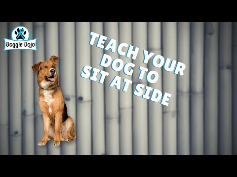 Teaching Your Dog to Sit At Side