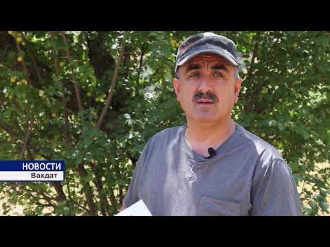 Сбор лекарственных трав в Ромите, Таджикистан