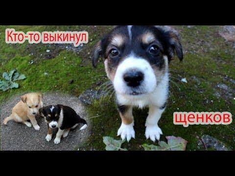 Подкинули щенков. ХОМКИ спешат на помощь