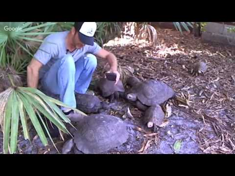 Black Mountain & Elongated Tortoise Habitat Kamp Kenan LIVE!