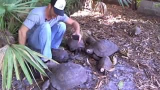 Black Mountain & Elongated Tortoise Habitat Kamp Kenan LIVE!