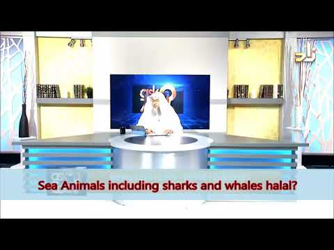 All Seafood Halal, Including Whales And Shark? - Sheikh Assim Al Hakeem