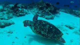 April 26 Columbia Deep Dalila and la Francesa  Turtle Big Moray EEl