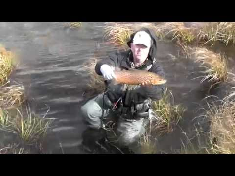 Gavin Hurley Fly Fishes Australia's Snowy Mountains Rivers Thredbo And Eucembene...