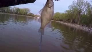 White bass fishing in Nebraska, May 2016