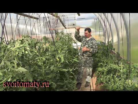 Типы роста и формирование высокорослых томатов
