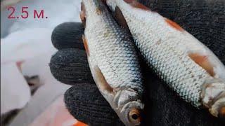 Рыбалка Плещеево озеро 2020 Окунь Плотва сорога