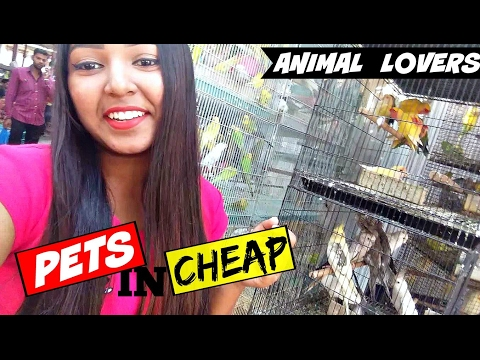 Best Market for ANIMAL LOVERS! | Crawford market, Mumbai.
