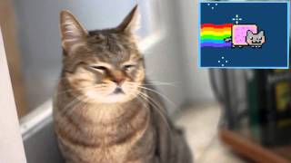 Cats React To Viral Videos - NYAN CAT